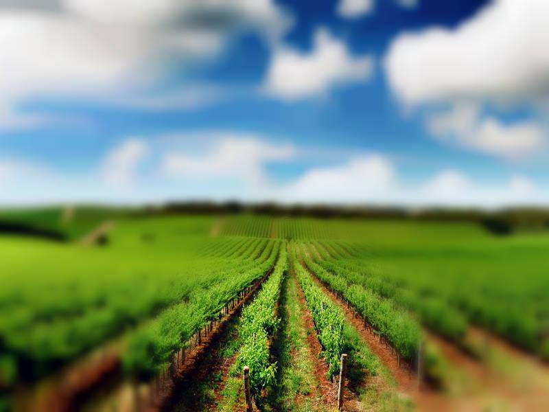 Pertanian Dan Perkebunan Akan Bagus Dengan Taqwa Pesantren